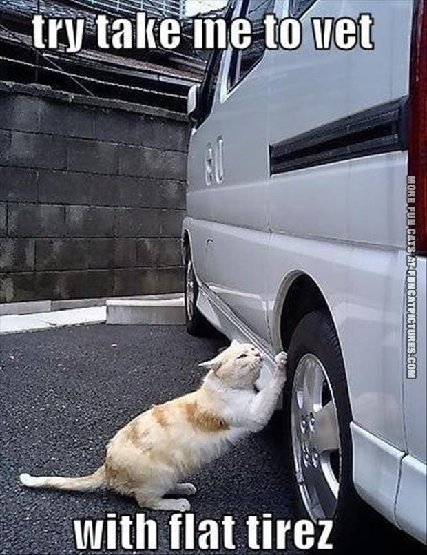 Try take me to the vet
