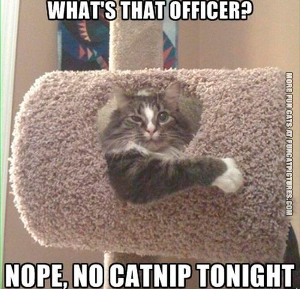 No catnip tonight