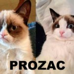 Grympy on Prozac