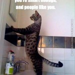 Self motivating cat