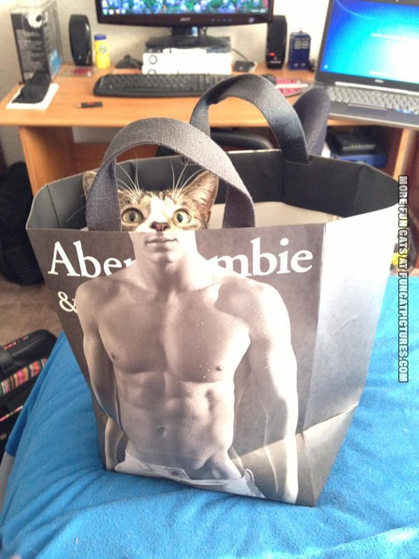 Six pack cat