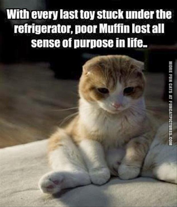 First world cat problem
