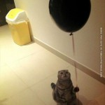 Sad cat with a balloon