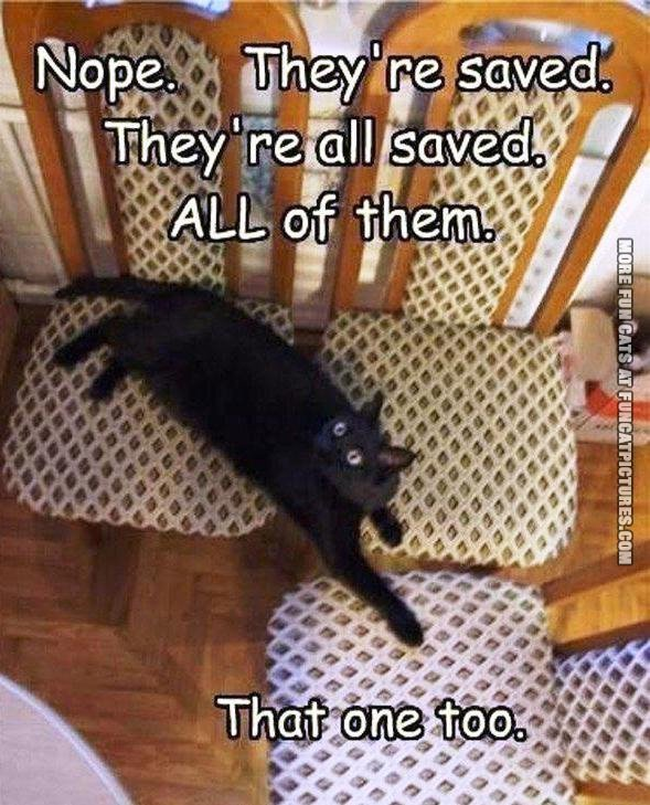 Cat saving the chairs