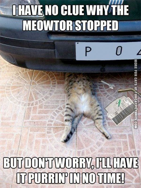 Cat mechanic