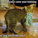 Knitting cat blames the dog