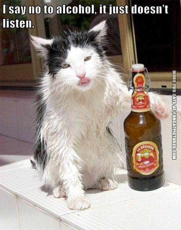 Alcoholic cat