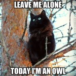Today i'm an owl