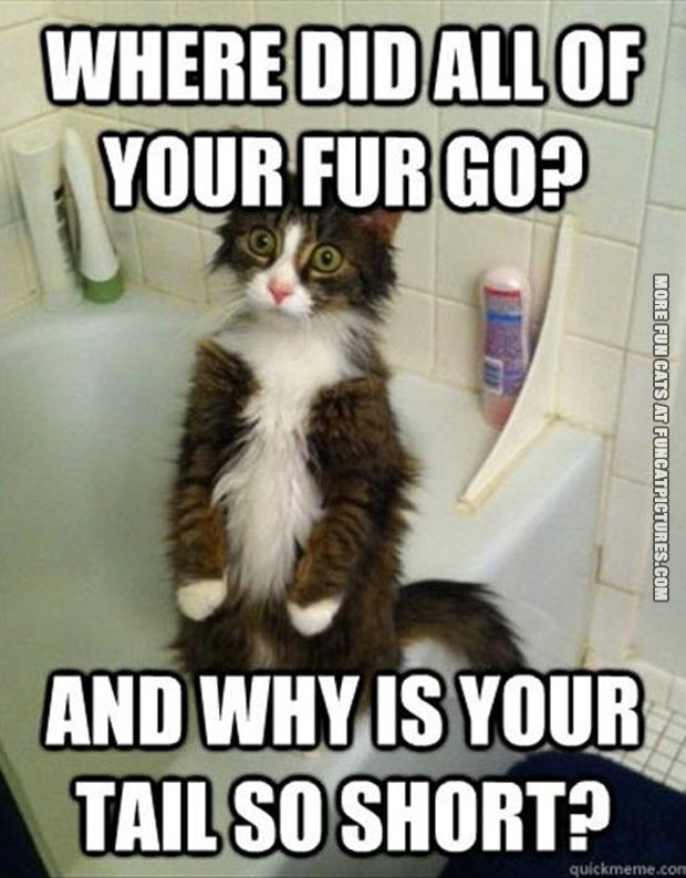 Where did your fur go?