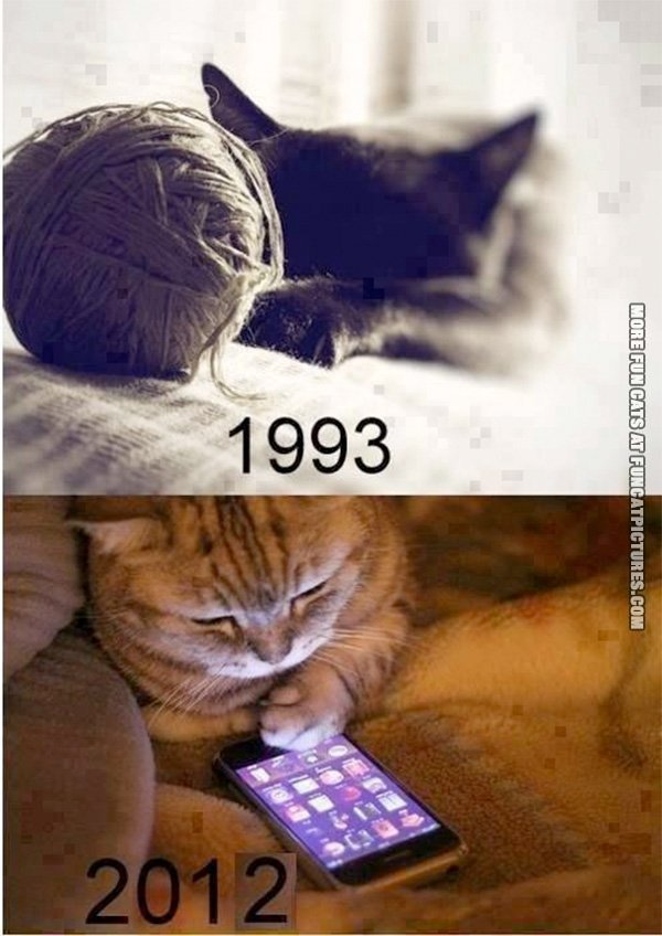 Cats nowadays…