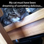 Drooling dreaming cat