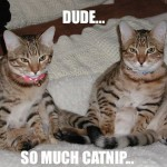 So much catnip