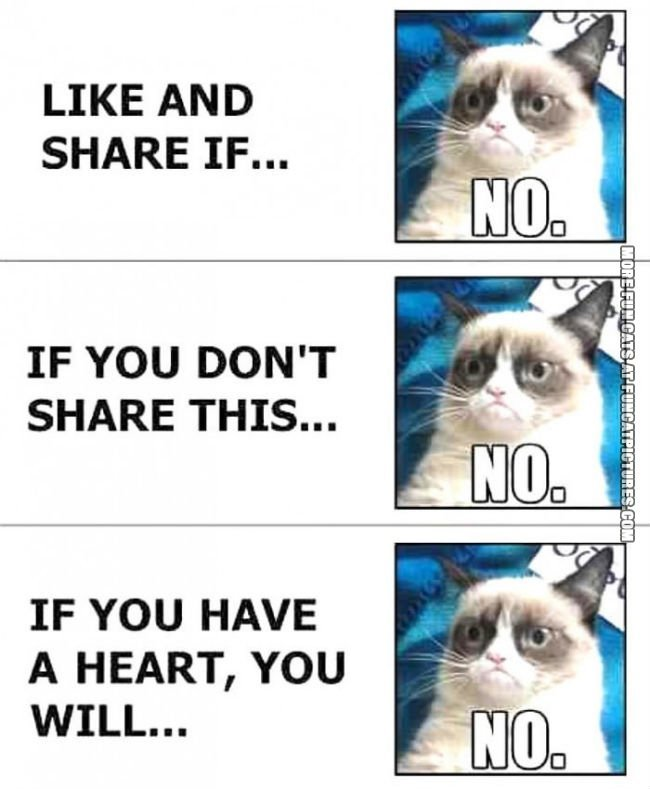 Grumpy on Facebook