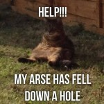 Cat with his arse down a hole