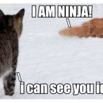 Ninja cat in the snow
