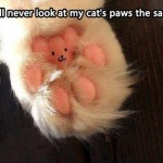 Painted cat paws