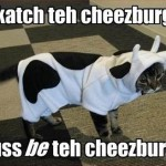 Cat in a cow dress