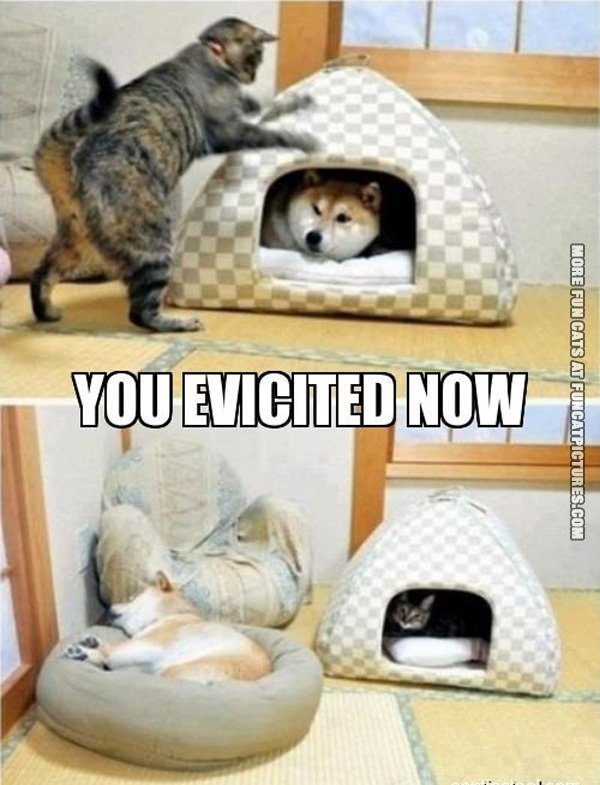 Cat evicting the dog