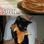 Some cat loves pancakes