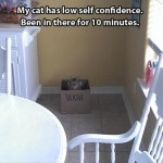 Cat with low self confidence