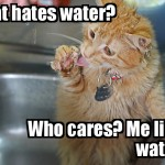 This cat likes water