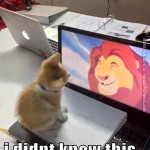 Cat watchin The Lion King