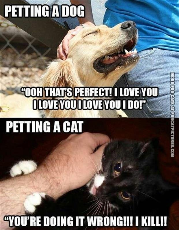 fun cat picture petting a dog vs petting a cat