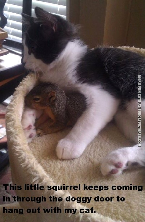 This squirrel is my cats best friend