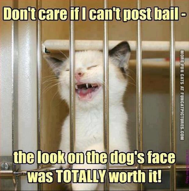 Cat in jail
