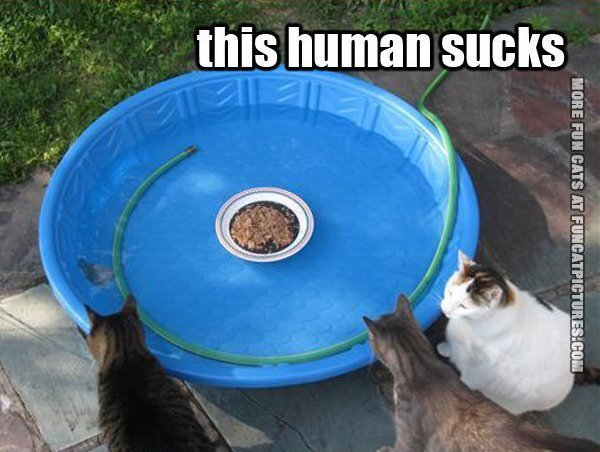 Catfood in water