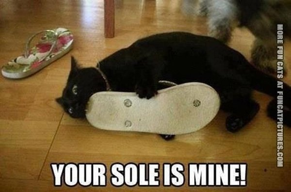 Your sole belongs to this cat