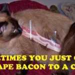 Bacon prank on a cat