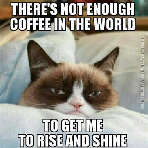 funny cat pics grumpy about coffee rise and shine