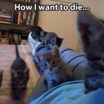 Death by kittens