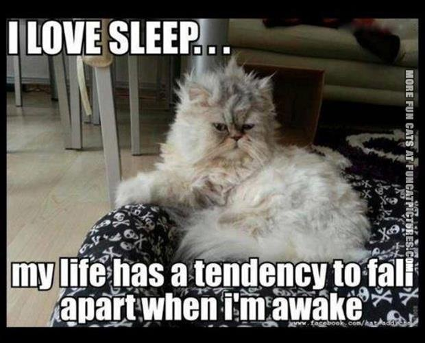 I Love You Quotes Humor : Cat loves his sleep Fun Cat Pictures
