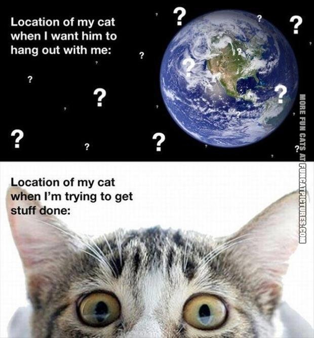 Location of my cat