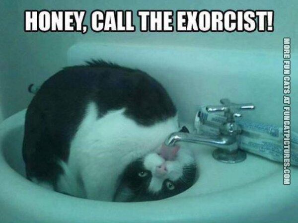 Cat in need of exorcism