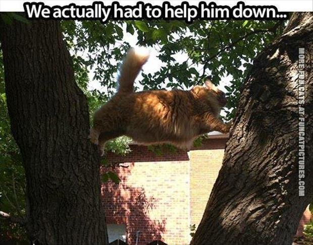 Fat cat in a tree