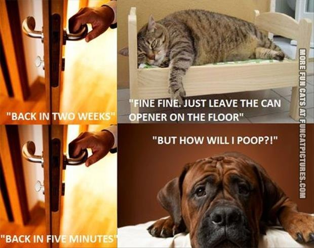 Leave the cat VS Leave the dog