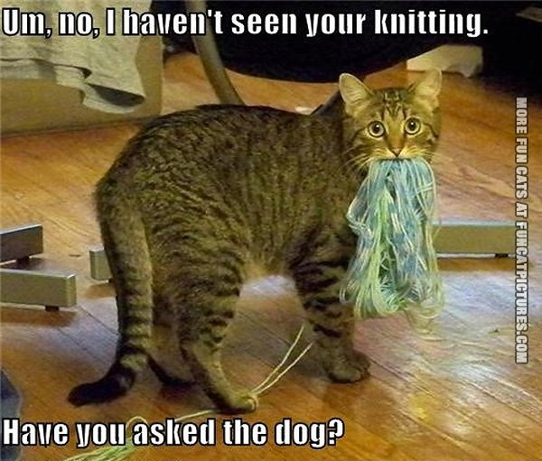 Knitting Archives Fun Cat Pictures