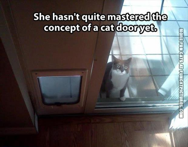Not the most clever cat