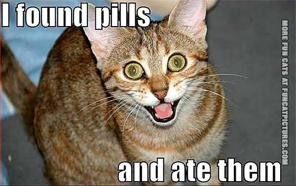 Cat on pills