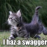 Kitten with swag