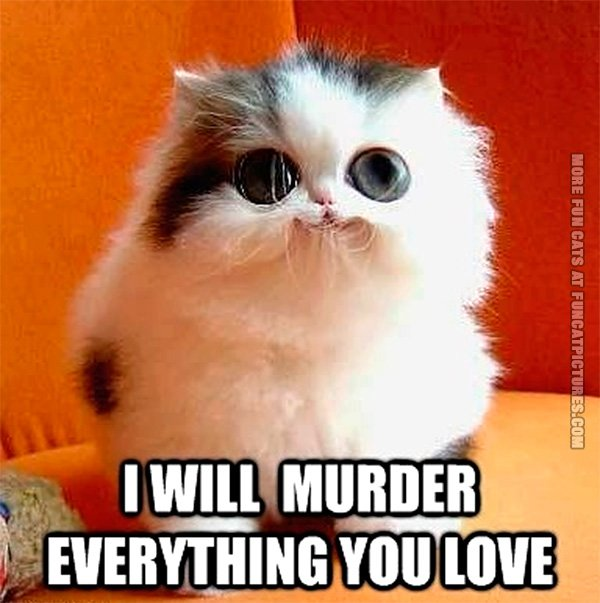 I Love You Quotes Pdf : Cute kitten plot Fun Cat Pictures