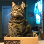 May contain awesome cat