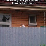 I think the neighbor's new cat hates me