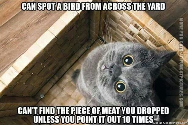Cats have perfect vision