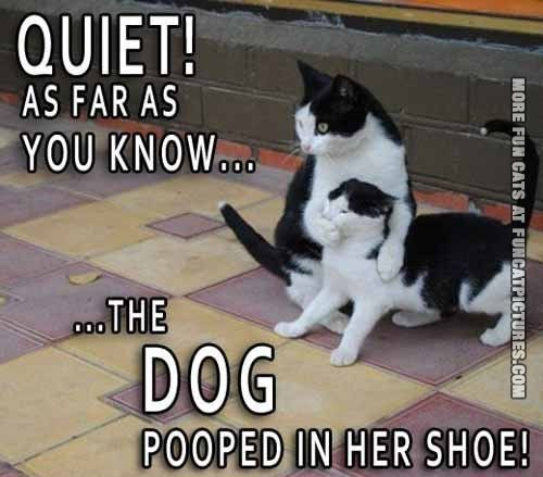 The dog pooped in her shoes