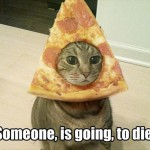 Cat with a pizza hat