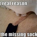 The cat is stealing the socks